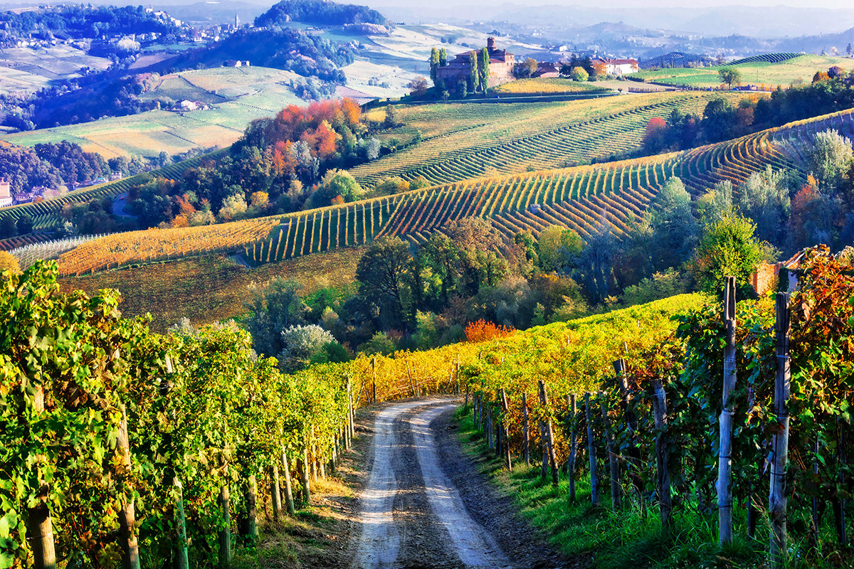 Vineyards and of Piemonte in autumn colors. North of Italy